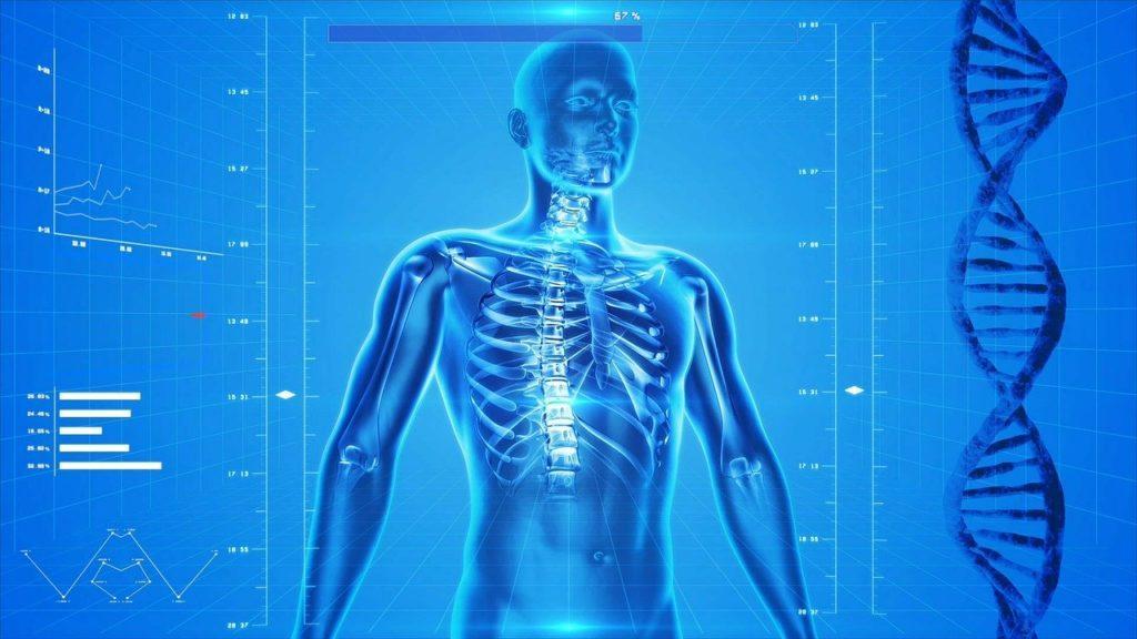 Illustration of human skeleton, body anatomy